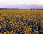 Flower1-007.jpg